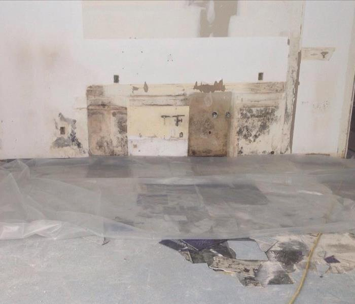 Is Mold Putting Your Business at Risk? Before